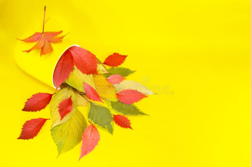 A yellow cup lies on a yellow table from which the bright leaves of the trees crumble. Autumn. A yellow cup lies on a yellow table from which the bright leaves royalty free stock images