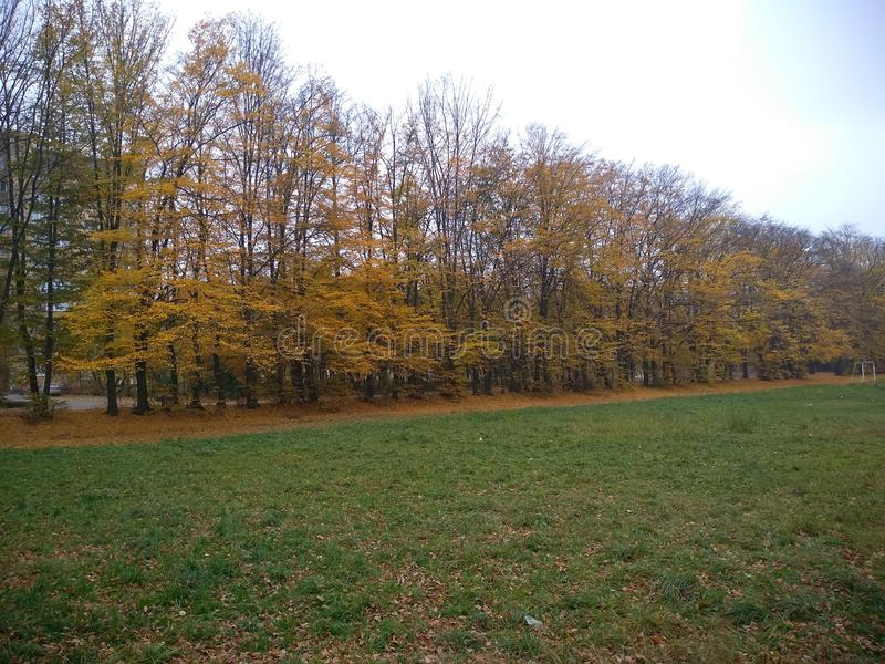 Autumn yellow landscape. Trees with yellow leaves of various shades in the park. Shear everywhere on the branches, in the air, on the ground. yellow invasion stock photo