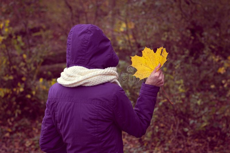 Autumn yellow leaf in a girl`s hands stock photo