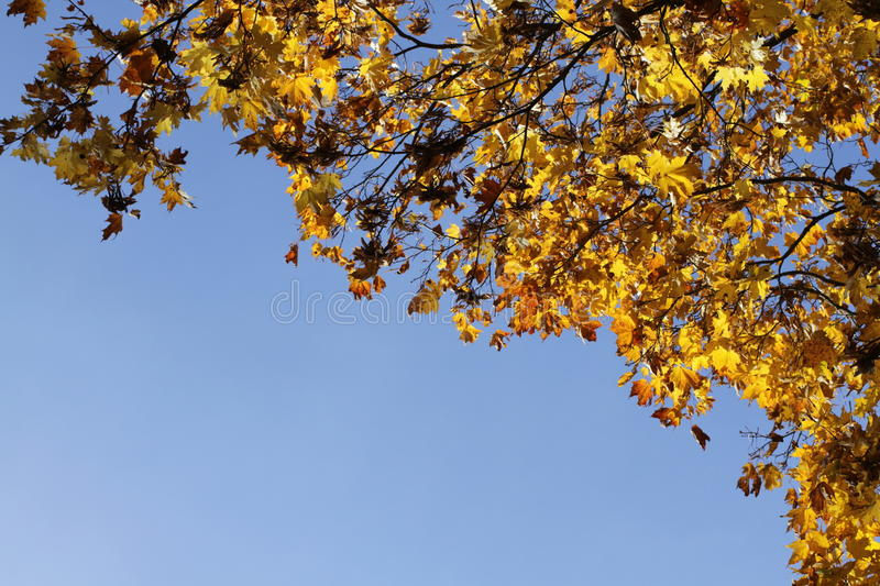 Download Autumn Yellow Leafs On Blue Sky Stock Illustration - Image: 93047986
