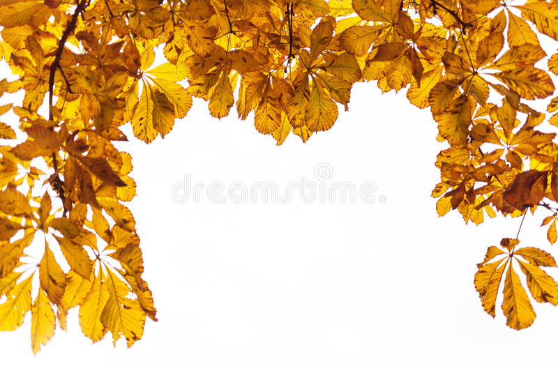 Autumn Yellow Leaves fotografie stock libere da diritti