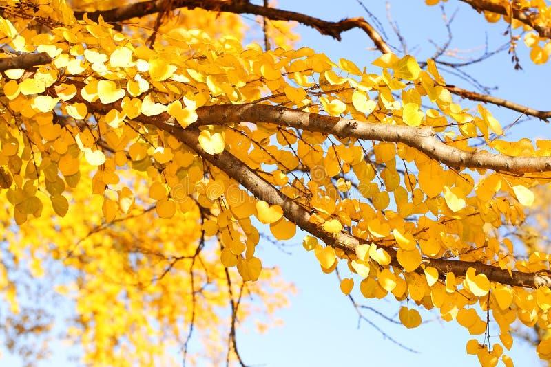 Autumn Yellow Leaves stock afbeeldingen