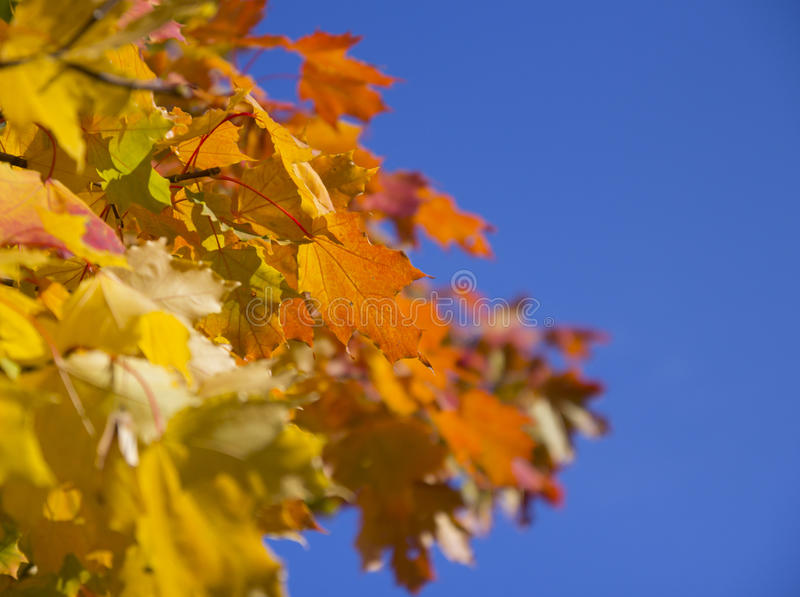 Autumn Yellow Leaves foto de stock