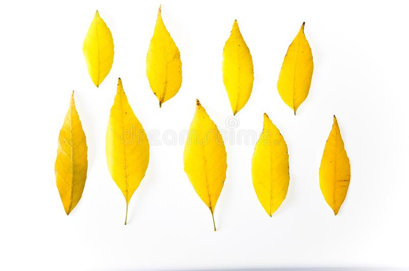 fall yellow leaves stock photography