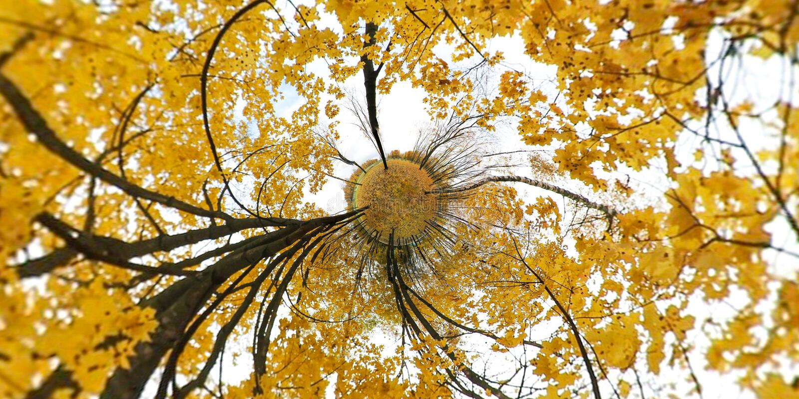 Autumn yellow leaves with vibrant colored background. Little planet. royalty free stock photos