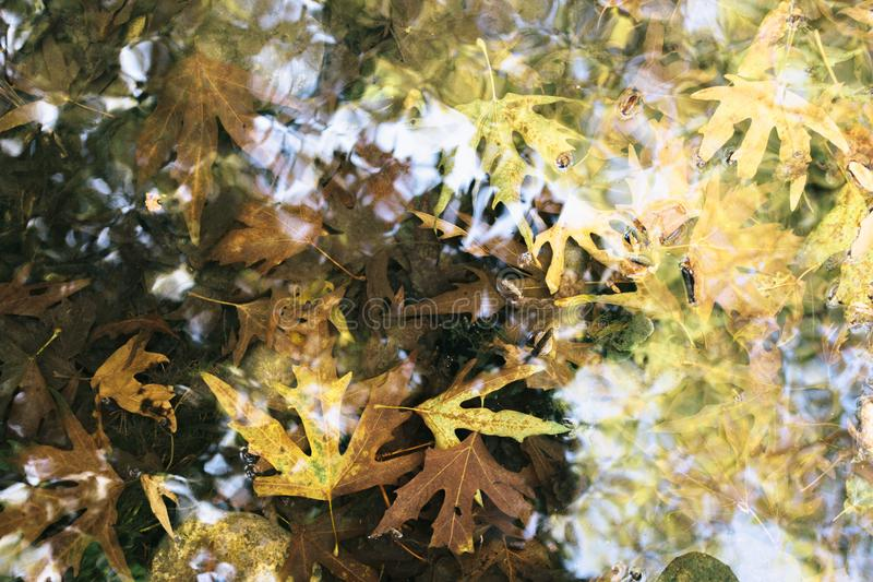 Autumn leaves in the creek. stock photography