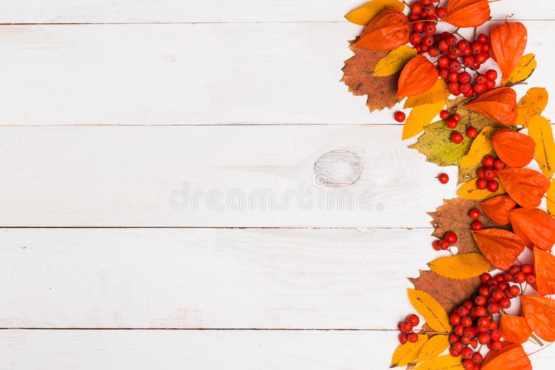 Autumn yellow orange leaves, Rowan berries, finalise on white wooden background with copy space for text stock images
