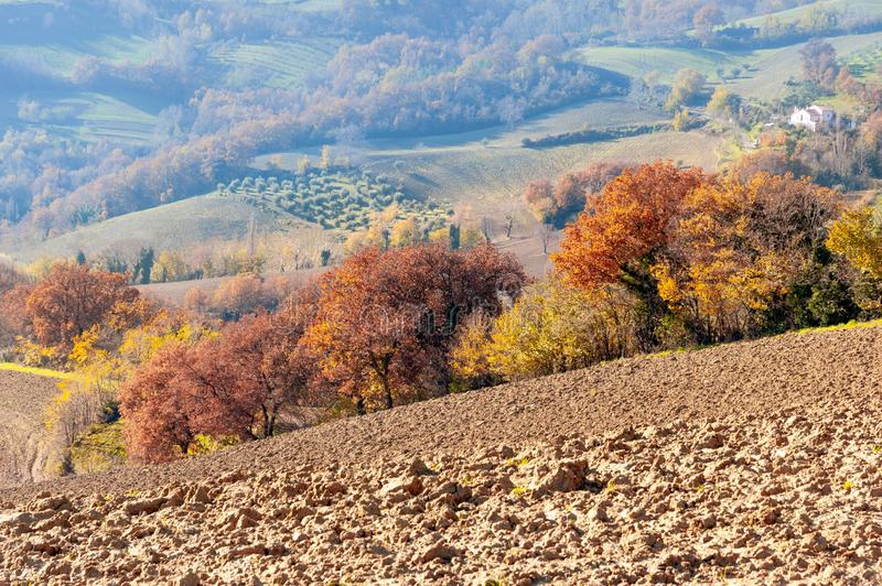 Autumn with yellow and orange trees on the Marche`s hill in the Montefeltro region. Seen from Belvedere Fogliense between Ricione and Urbino, in Italy royalty free stock photo