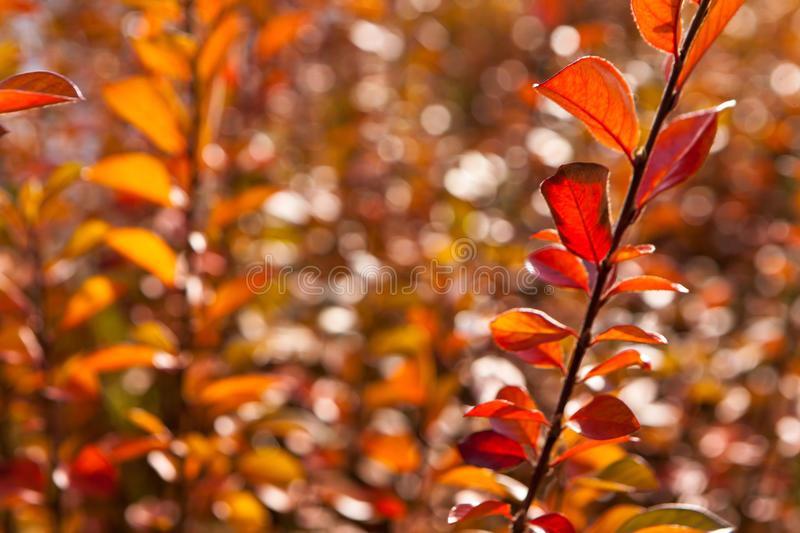 Autumn yellow and red leaves against the blue sky royalty free stock images