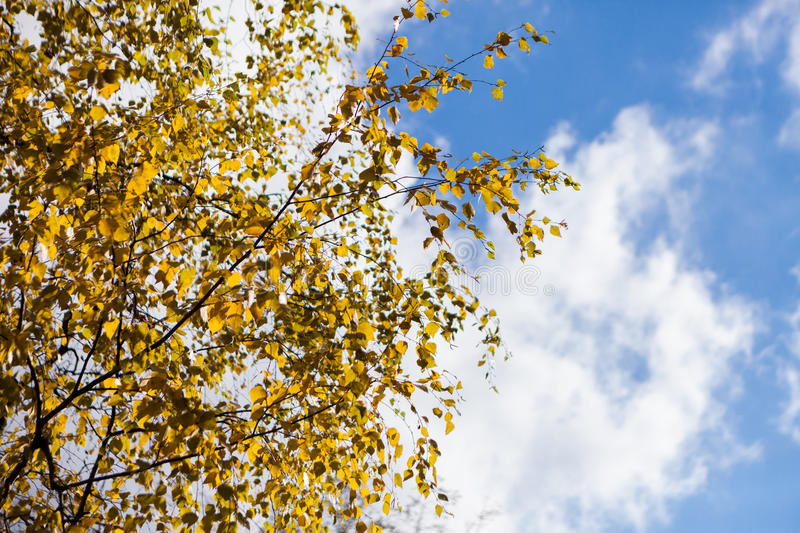 Autumn yellow and red leaves against the blue sky royalty free stock photo