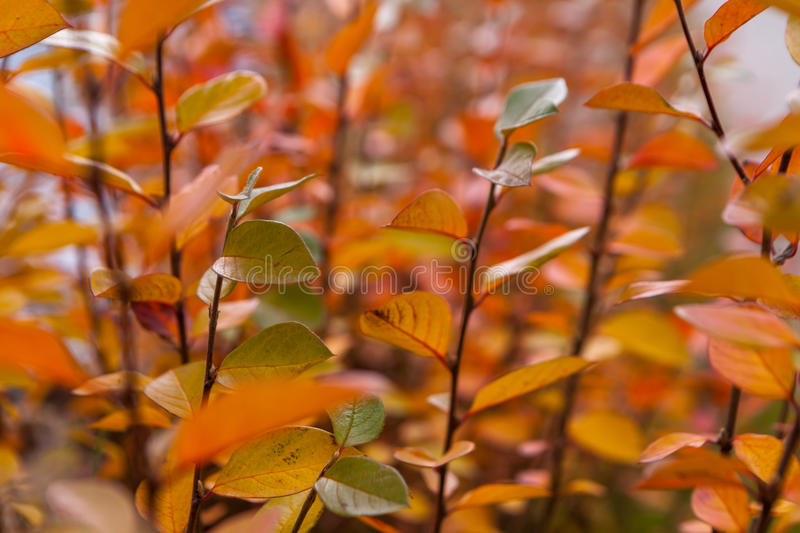 Autumn yellow and red leaves against the blue sky stock image