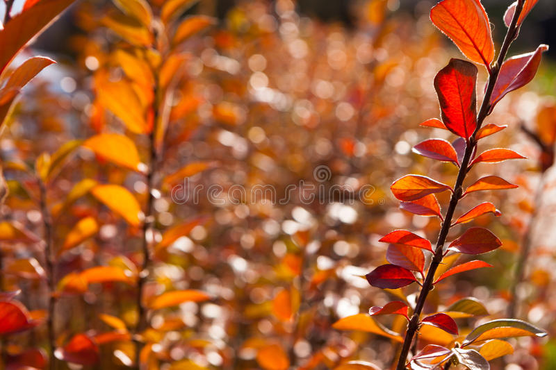Autumn yellow and red leaves against the blue sky royalty free stock photography