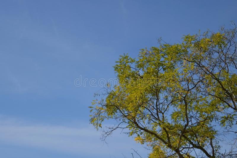Autumn tree with a celestial background. stock photography