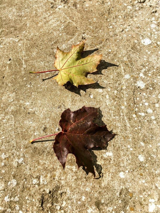 Autumn Yin och Yang royaltyfri foto