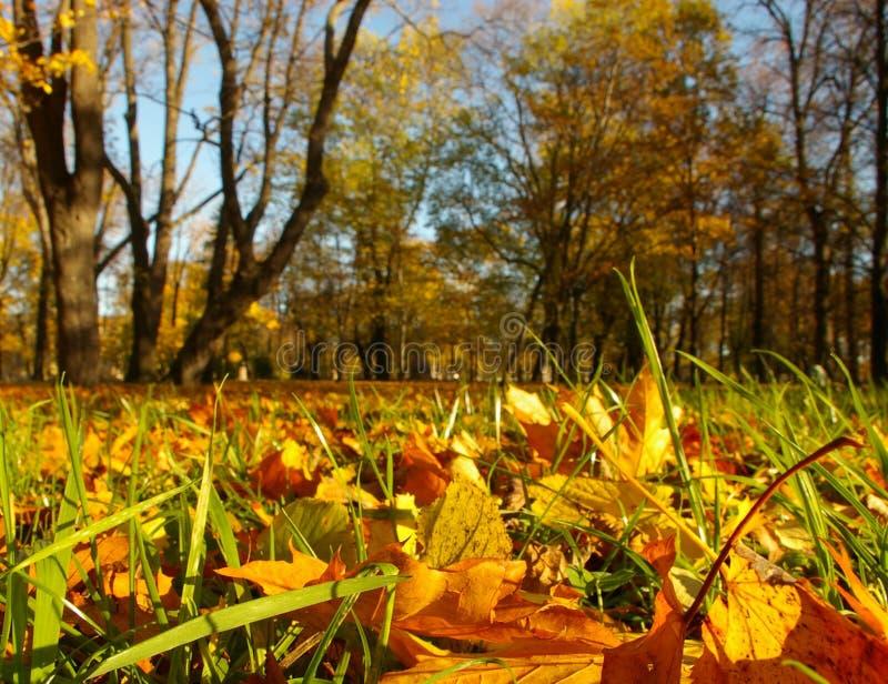 autumn złota obraz royalty free
