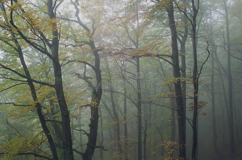 Autumnal...