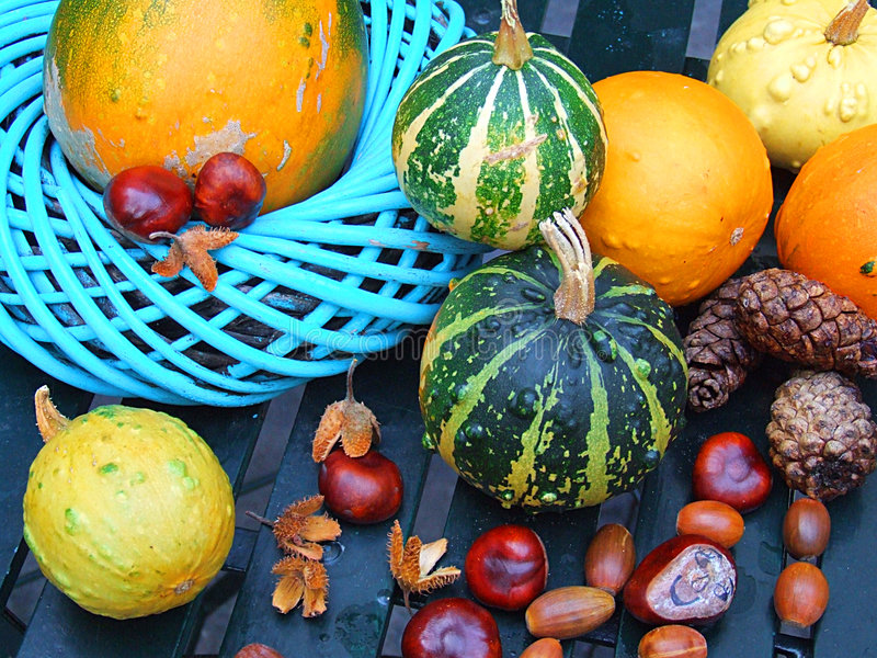 Autumnal royalty free stock photos