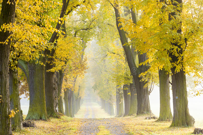 Download Autumnal alley stock image. Image of exteriors, calmness - 27010037