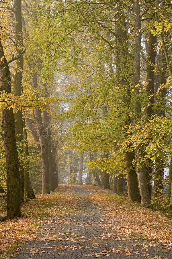Download Autumnal alley stock image. Image of tree, colors, alley - 4699033