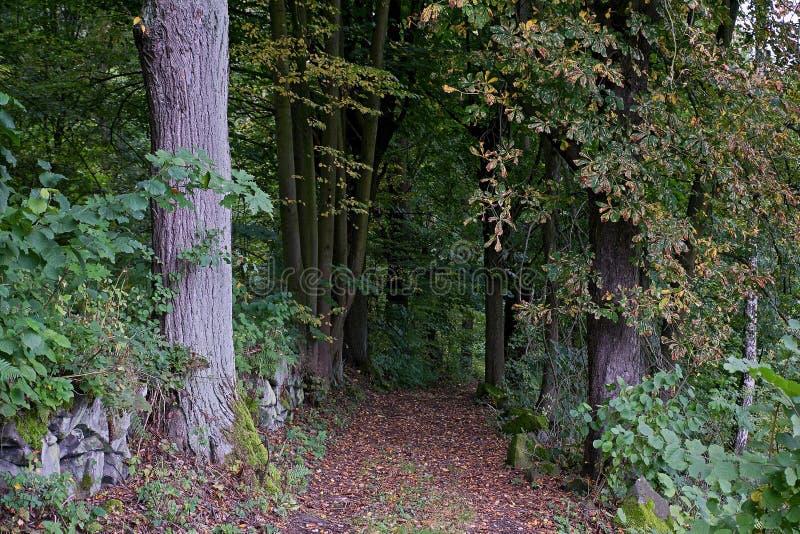 Autumnal alley near czech city of Benesov nad Ploucnici on 29th september 2019 stock photography