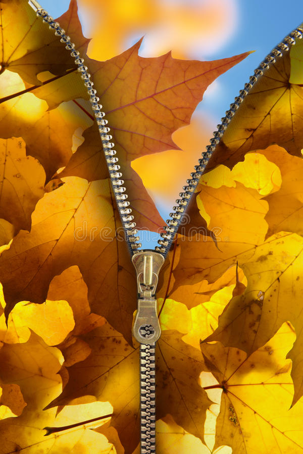 Download Autumnal atmosphere stock image. Image of zipper, autumnal - 10677423