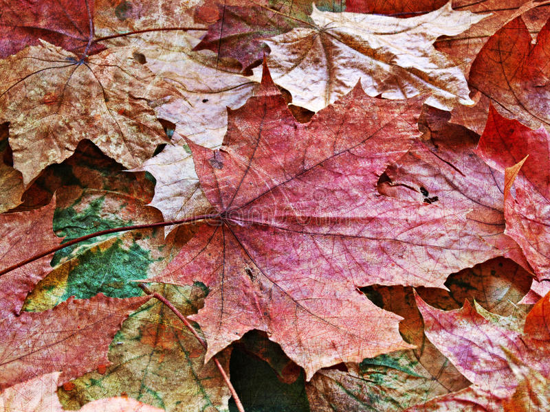Download Autumnal background stock image. Image of artistic, worn - 10906593