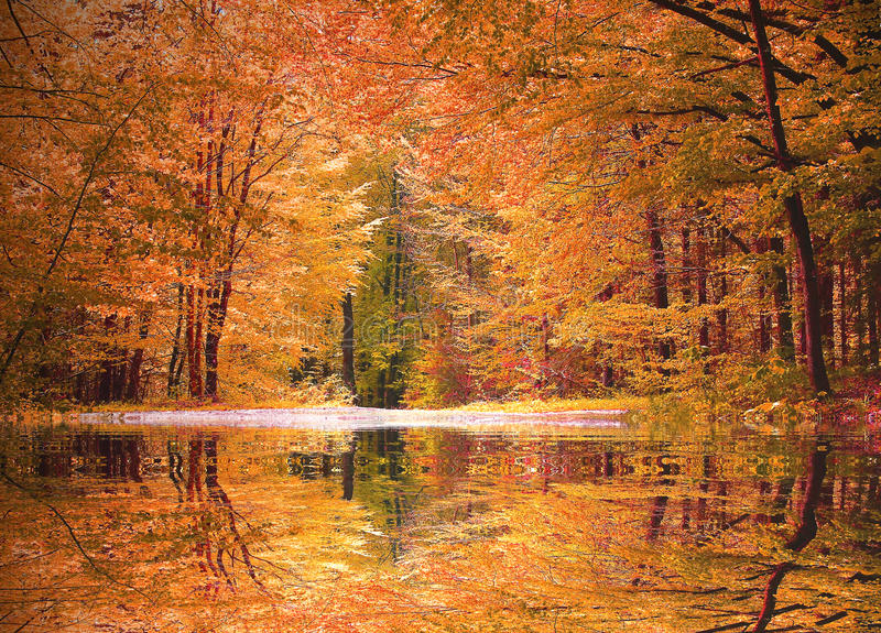 Autumnal beech tree forest with a little biotope. Reflecting trees in the water stock image
