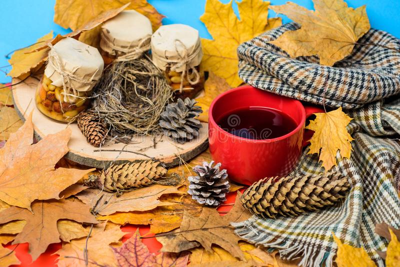 Autumnal beverage with homemade natural sweets. Natural homemade treats autumn season keep healthy. Set three honey royalty free stock images