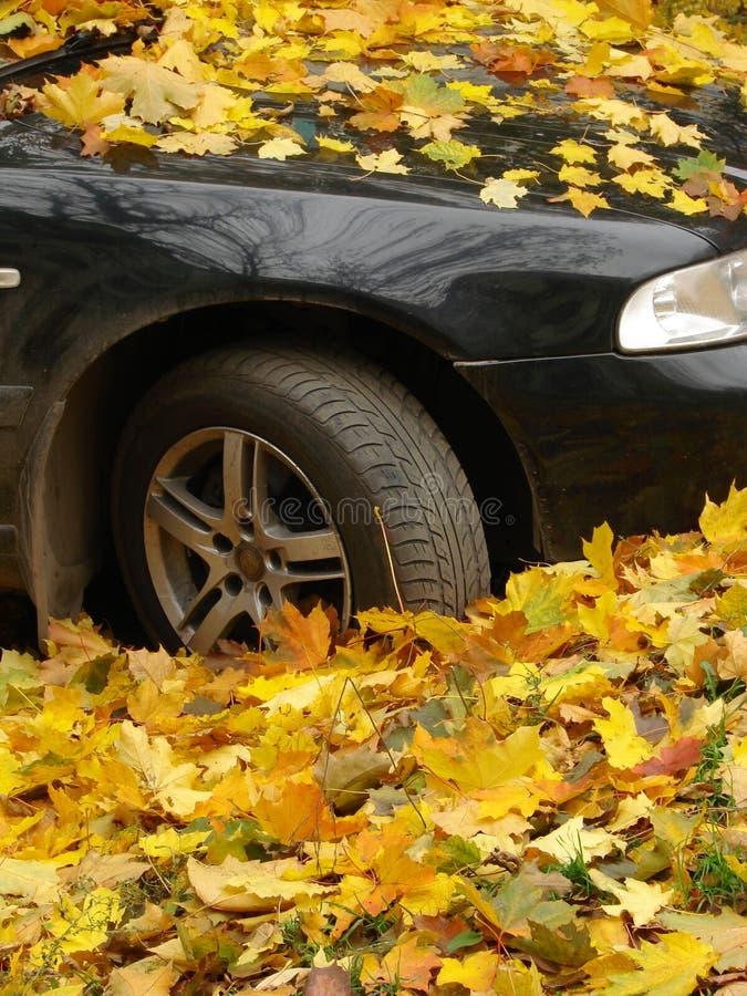 Autumnal car stock photos