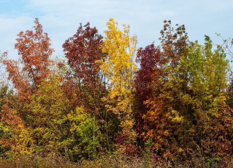Autumnal bushes in the Hungarian wilderness stock image