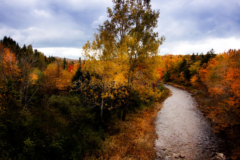 Download Autumnal Colors stock image. Image of environment, footpath - 11451911