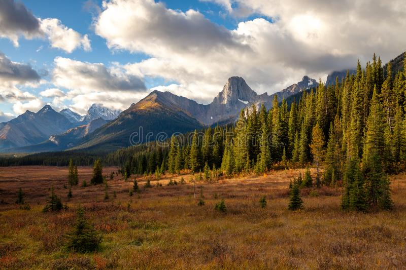 Autumnal colors in the the Canadian Rocky Mountains royalty free stock photo