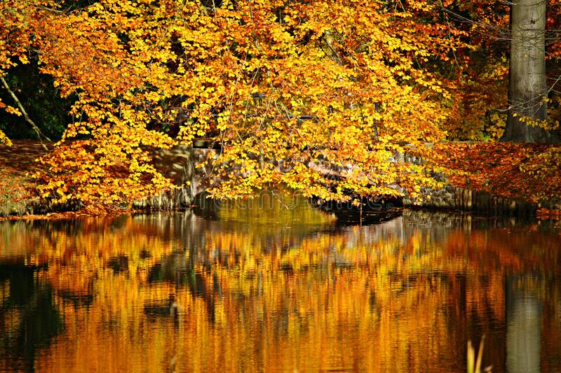 Autumnal colors royalty free stock photography