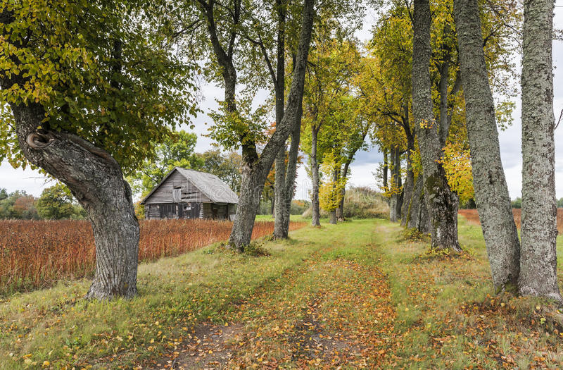 Autumnal country road, Latvia. Country road among trees , Cesis, Latvia, Europe stock images