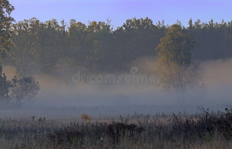 Autumnal dawn over rural meadows. stock photos