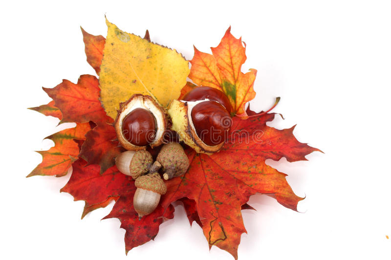Autumnal decoration stock photos