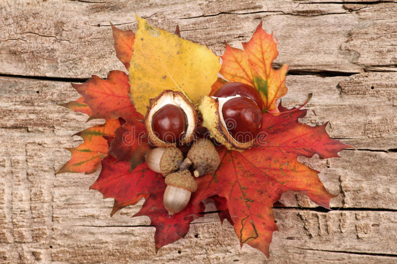 Autumnal decoration royalty free stock photo