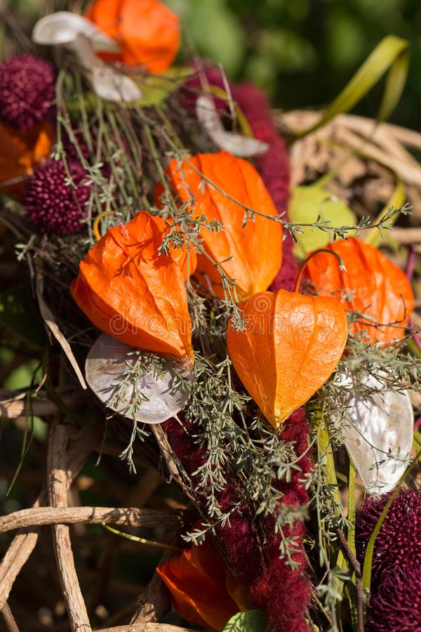 Autumnal decoration with Chinese lantern plant Physalis alkekengi stock photography