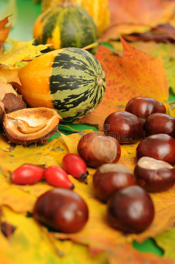 Autumnal decoration stock photo