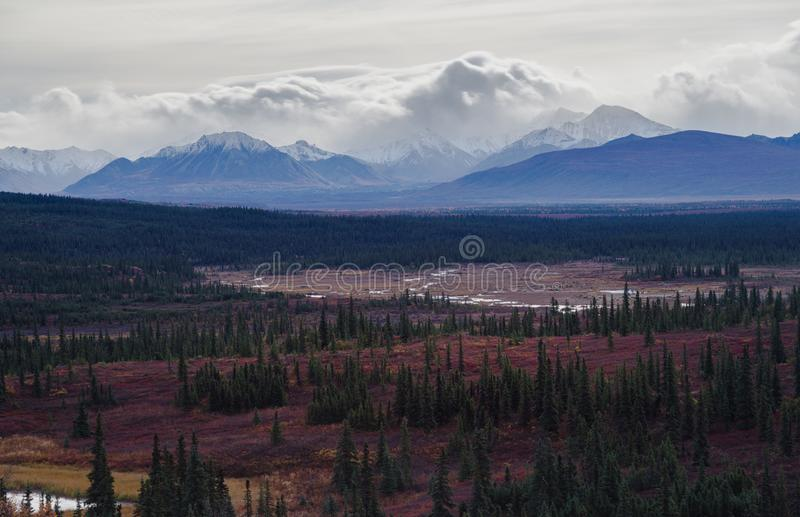 Autumnal Denali National Park Scenery in cloudy day royalty free stock images