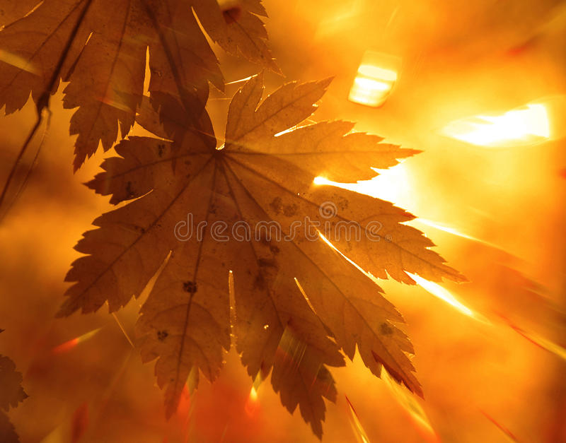 Download Autumnal design stock photo. Image of design, changing - 13358986