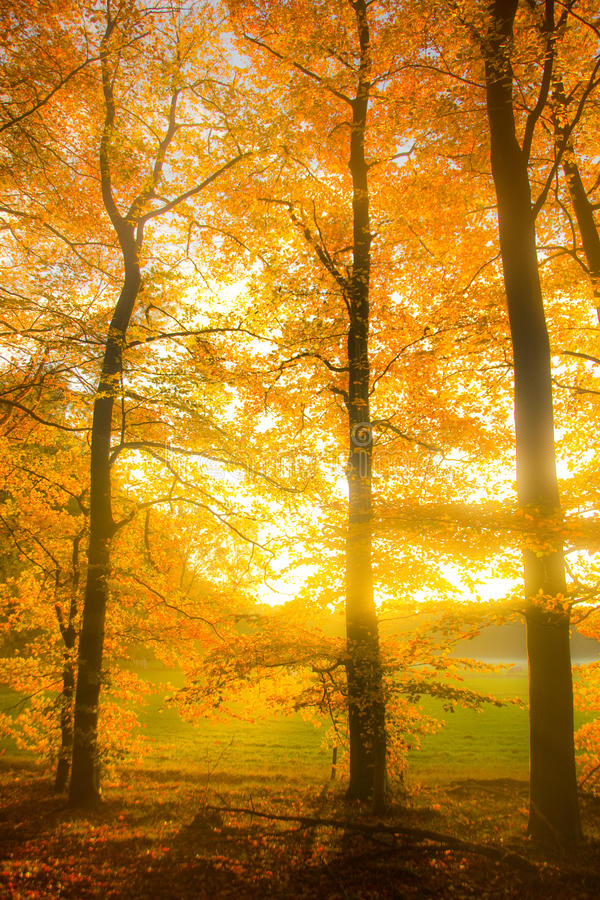 Download Autumnal Dreams stock image. Image of meadow, beech, goodbye - 24861071