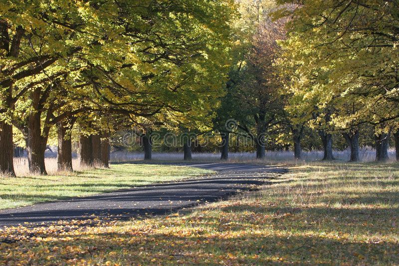 Autumnal Drive royalty free stock photo