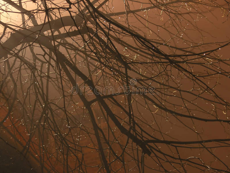 Autumnal evening stock image