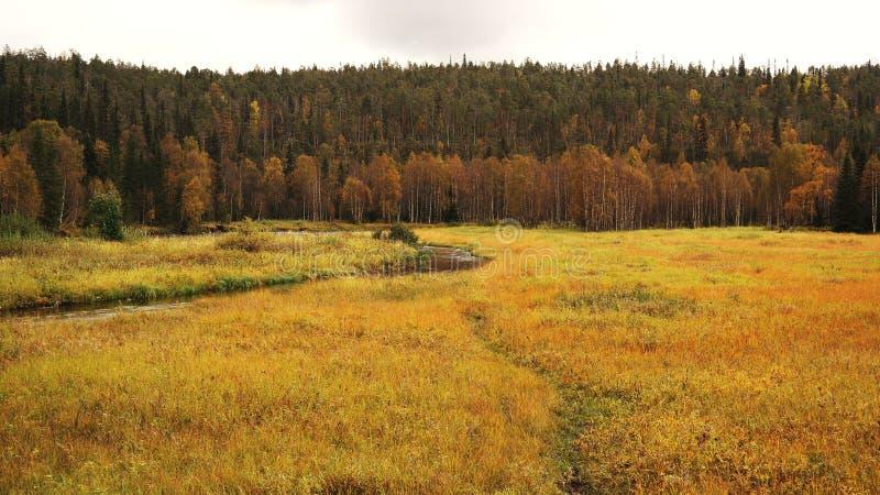 Autumnal finnish nature stock photography