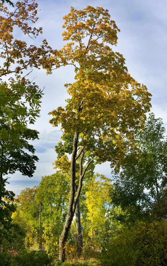 Download Autumnal forest stock photo. Image of outdoor, leaves - 11109968