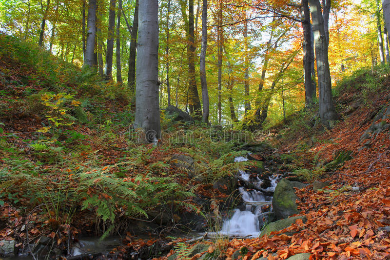 Download Autumnal forest stock photo. Image of sunshine, fresh - 16504130