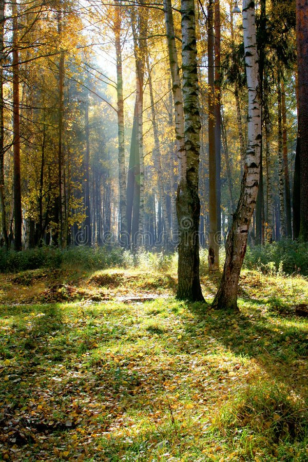 Autumnal forest. Autumnal beauty of nature. Forest royalty free stock photography