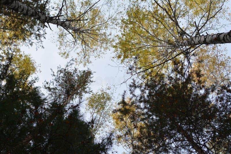 autumnal forest στοκ φωτογραφία με δικαίωμα ελεύθερης χρήσης