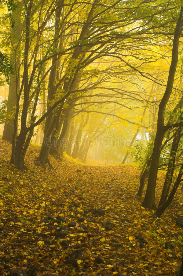 Download The Autumnal Forest Royalty Free Stock Photography - Image: 6947987